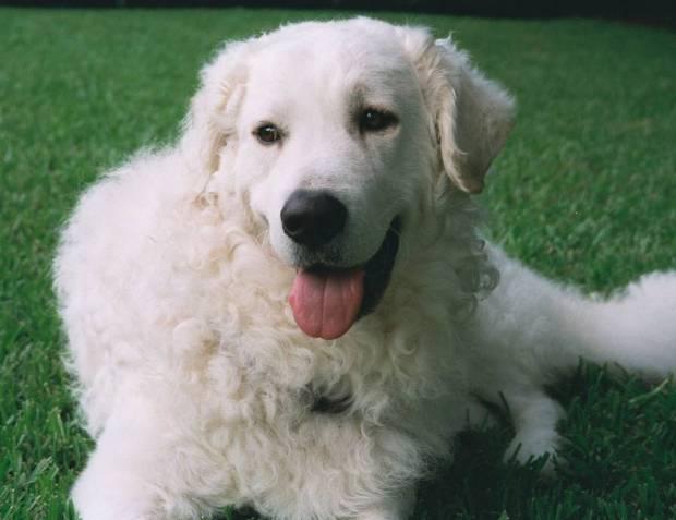 10 Rare Dog Breeds You...